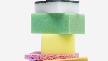 Les éponges : un terrain humide propice aux bactéries