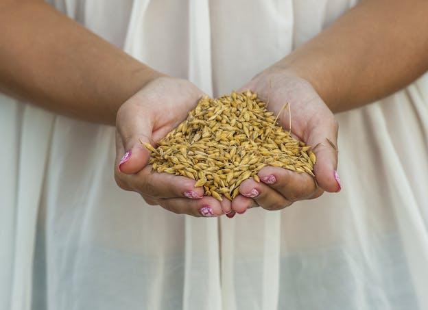 Redécouvrez les céréales oubliées