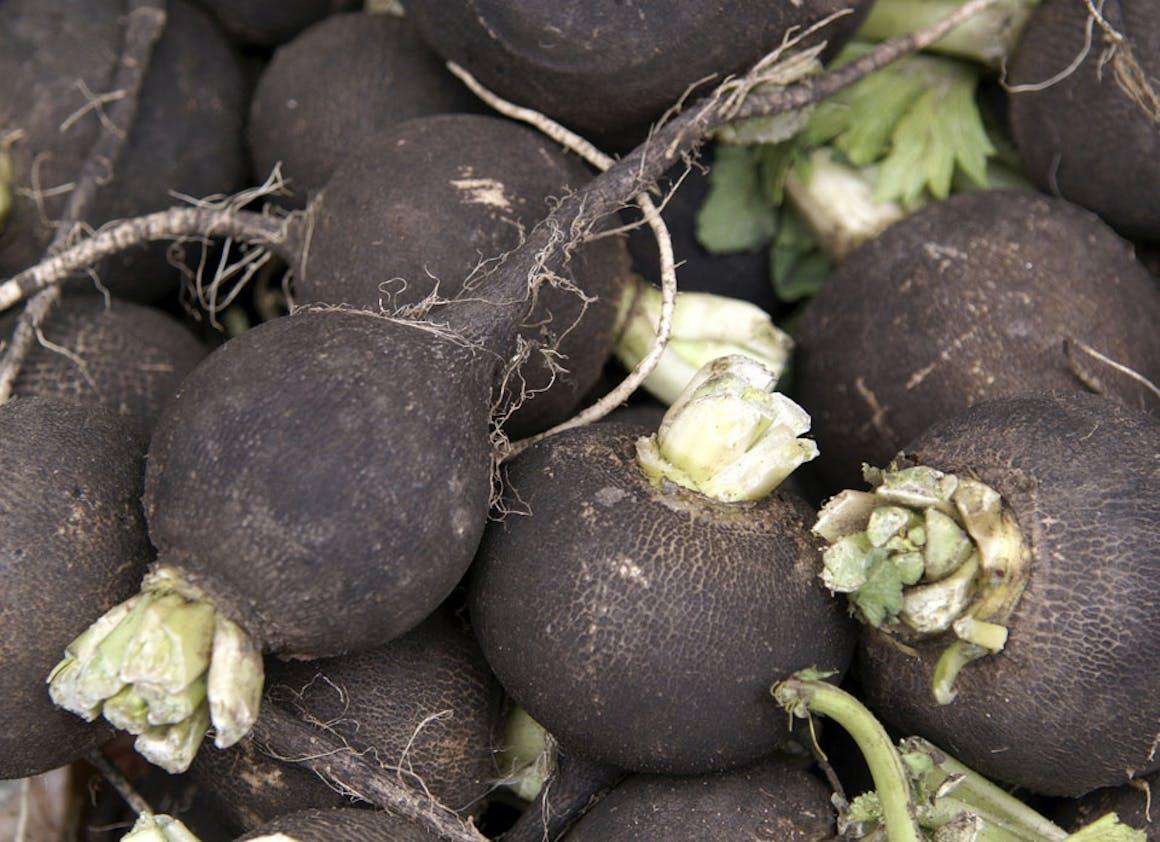 Radis noir : détoxifiant et fluidifiant