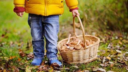 C'est la saison des champignons!