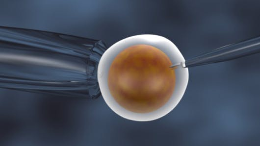 Fécondation in vivo, une nouvelle technique contre l'infertilité