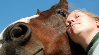 Equithérapie: le cheval au secours des troubles psychologiques