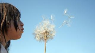 Allergies: pourquoi un tel boom?