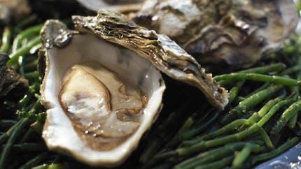 L'huître: un trésor de bienfaits nutritionnels
