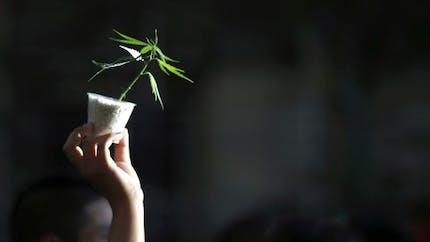 Huit idées reçues sur le cannabis