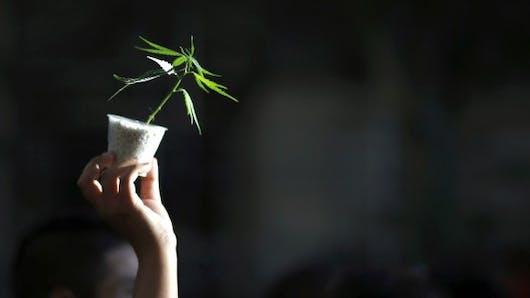 6 idées reçues sur les effets du cannabis sur la santé