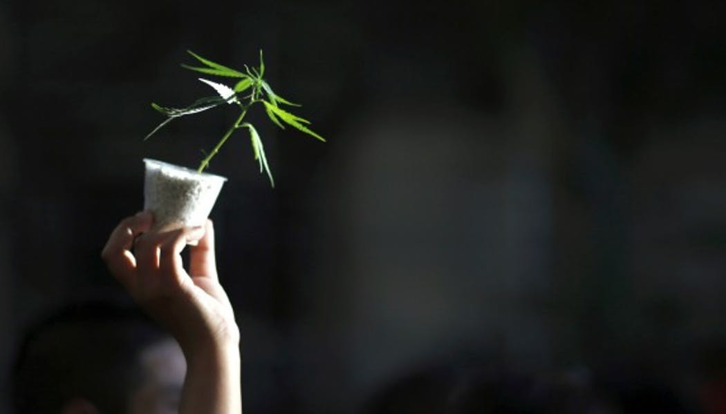 Consommation de cannabis : une étude en détaille la durée des effets psychotropes