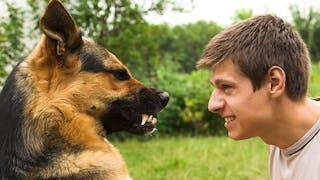 Morsure de chien: comment réagir?