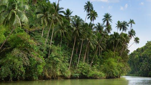 Voyages: protégez-vous du paludisme!