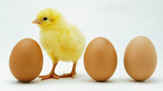 Alimentation: la vérité sur les œufs