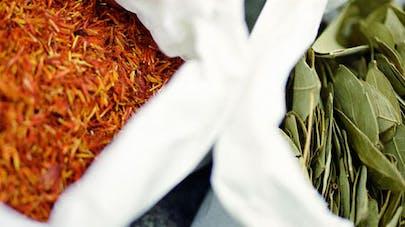 Phytothérapie: le boom des plantes qui soignent