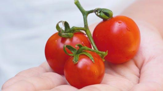 La tomate, une alliée anti-âge