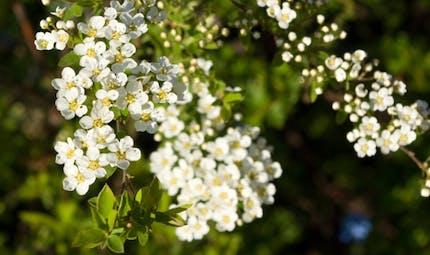 Les plantes qui soulagent les rhumatismes