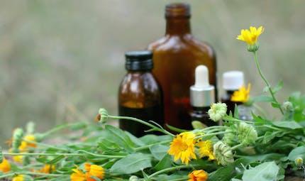 Les plantes qui soulagent la douleur