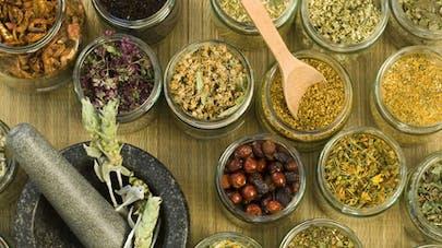 Phytothérapie mode d'emploi :   comment utiliser les plantes pour se soigner