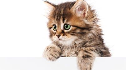 Améliorez votre concentration en regardant des photos de bébés animaux