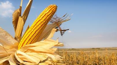 OGM: l'étude du Pr Séralini jugée insuffisante par l'Autorité européenne