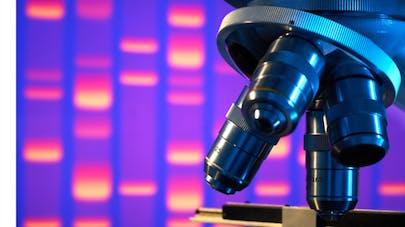Le Sénat autorise la recherche sur l'embryon