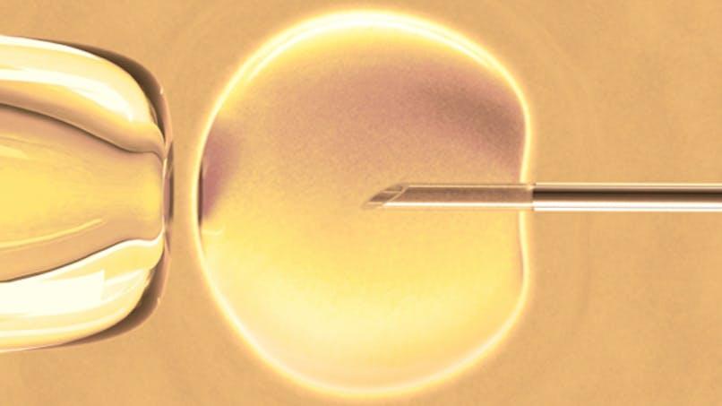 La conservation des ovocytes sans raison médicale pourrait être autorisée