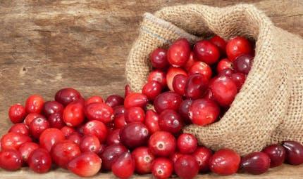 Canneberge : bienfaits et effets indésirables de la Cranberry