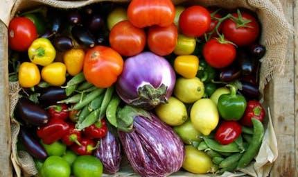 Insuffisance rénale: les fruits et légumes sont bons pour les reins