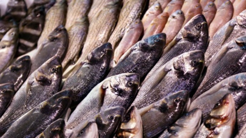 Retour des farines animales pour nourrir les poissons