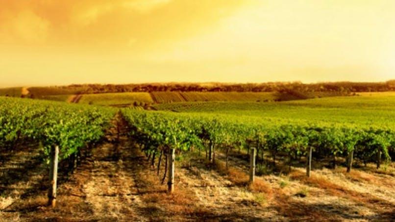 Pesticides: les salariés viticoles et les riverains sont très exposés