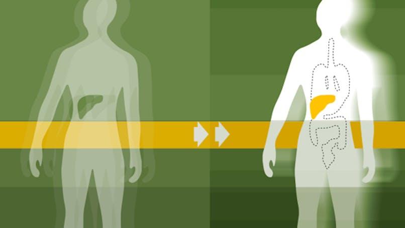 Plus de 5000 greffes d'organes en France pour la première fois