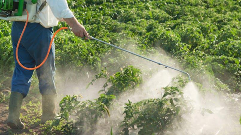 Pesticides: une association porte plainte contre l'Etat