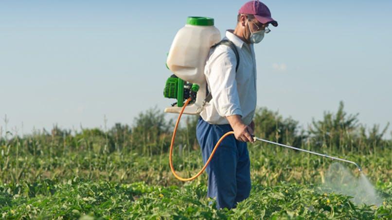 Insecticides: les Français plus exposés que les Américains et les Allemands