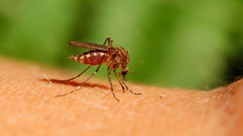 France: alerte rouge aux moustiques dans l'Aube
