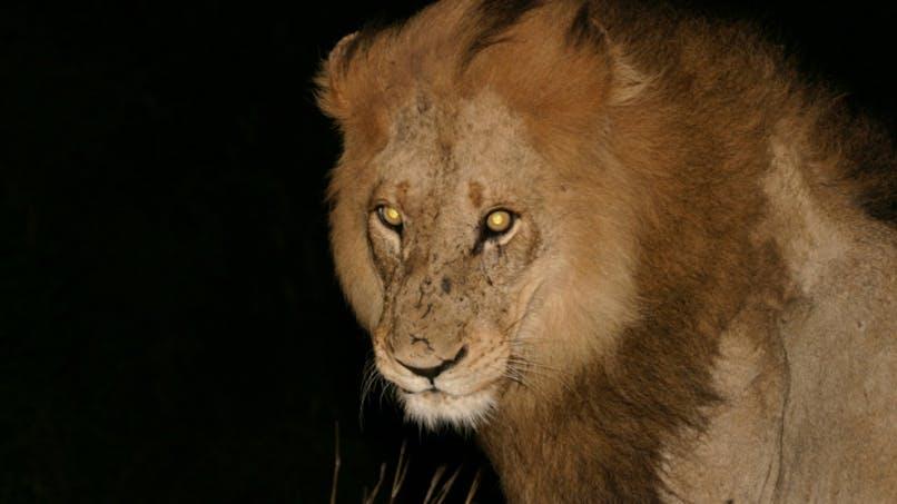 Les couche-tard, un profil de prédateur?