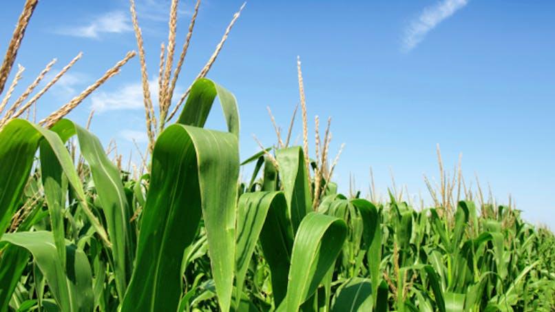 Les herbicides pourraient augmenter le risque de dépression