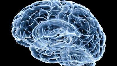 Alzheimer, Parkinson: une piste de recherche prometteuse