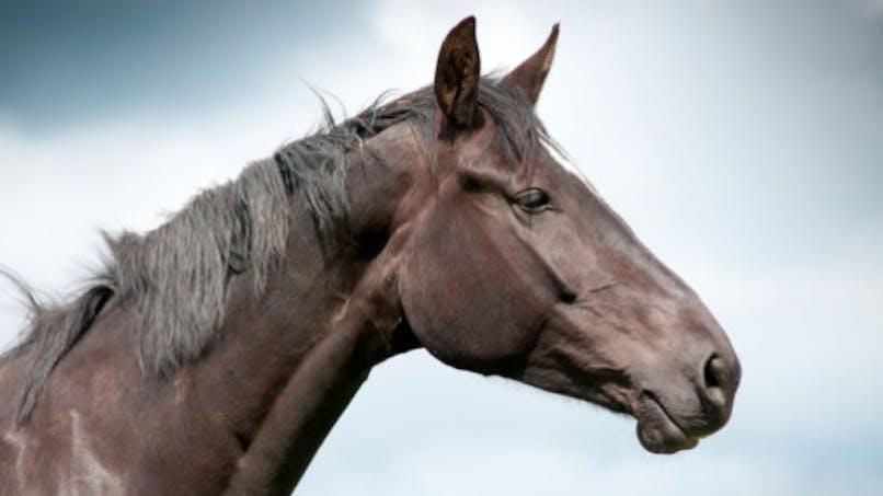 Trafic de viande de cheval: pas de risque sanitaire selon Sanofi