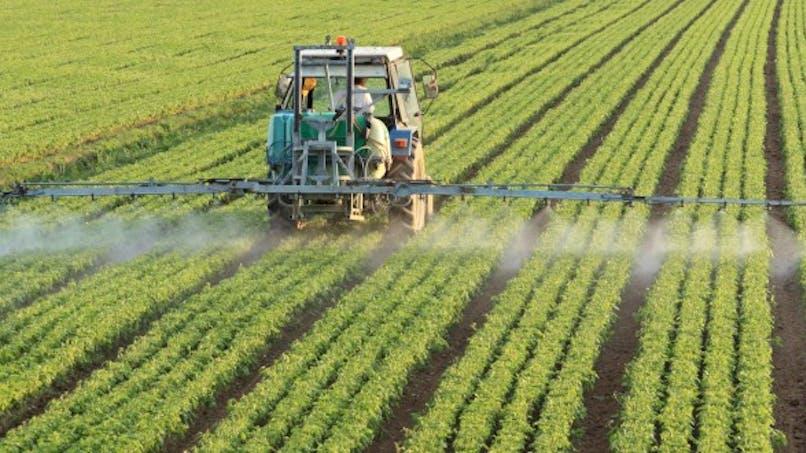 Deux insecticides dans le collimateur à cause de leurs risques neurotoxiques
