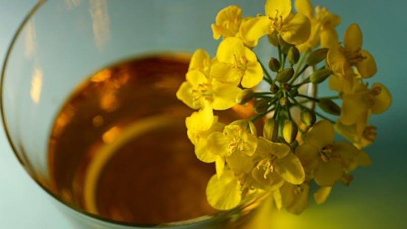 La vitamine E, efficace pour ralentir la progression de la maladie d'Alzheimer
