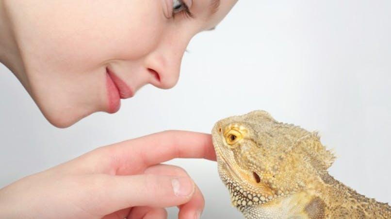 Tortues, lézards: des animaux de compagnie pas si inoffensifs....
