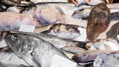 Farines animales, quels risques pour notre santé?
