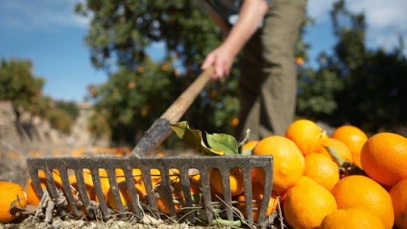 Près d'un quart des agriculteurs ont un risque élevé de burn out