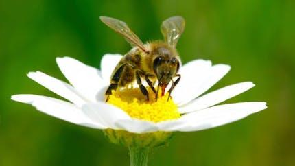 Allergiques: vérifiez votre stylo-injecteur d'adrénaline