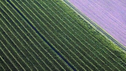 L'interdiction du maïs OGM proposée par les députés