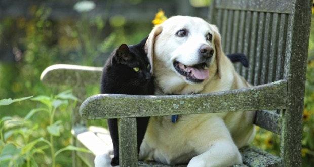 site de rencontre pour chiens uccle