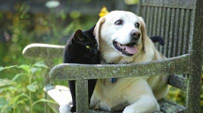 Soigner l'allergie saisonnière de votre chien ou de votre chat