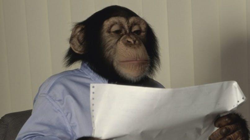 Un chimpanzé s'oriente mieux qu'un enfant