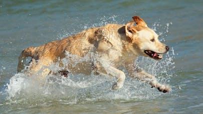 Mon chien à la plage, à la montagne, à la piscine: les précautions