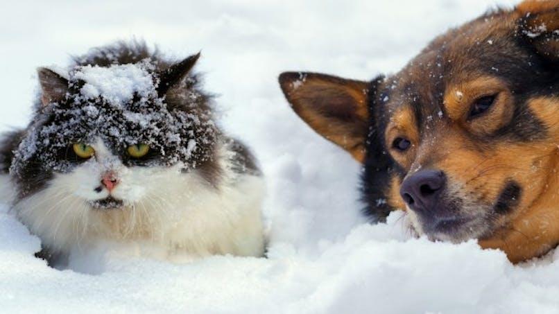 Chien et chat: peut-il rester dehors dans le froid?