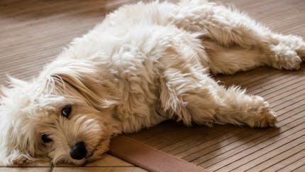 Détendre et caresser un chien stressé
