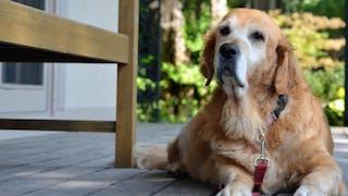 Adopter un chien âgé, pourquoi pas?