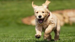 Comment laisser mon chien au jardin